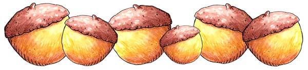 6x2-acornseparator