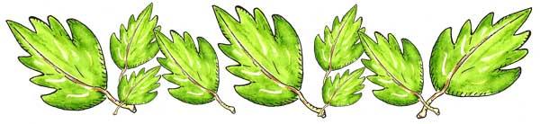 6x2-greenleafseparator