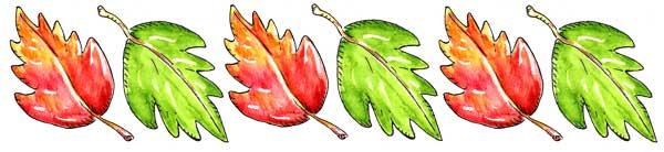 6x2-leafseparator